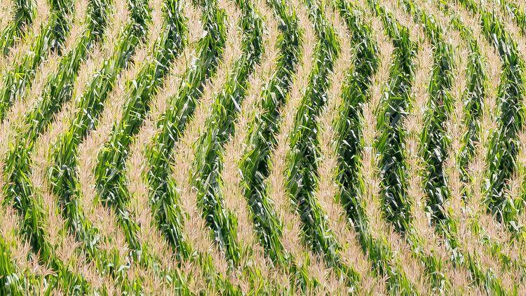 rowcrop planting technology